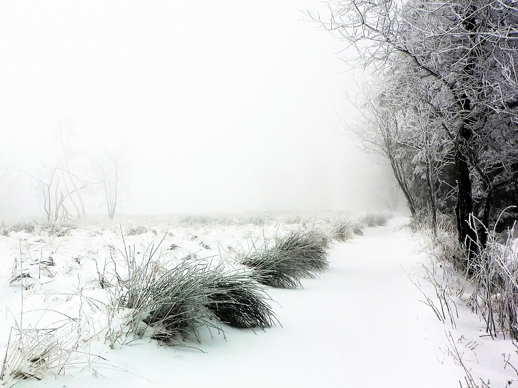Snow at High Fens